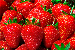 Buyer from Czech Republic is looking for the STRAWBERRY