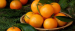 Importer from Canada is looking for CLEMENTINES