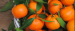 Buyer from Hong Kong is looking for MANDARINS