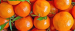 Buyer from USA is looking for Tangerine Murcott