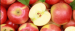Importer from Egypt is looking for APPLES