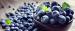 Importer from The Netherlands is looking for Blueberry